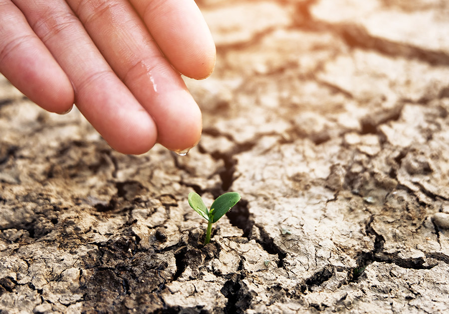 Planting seed in drought